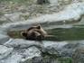 несчастный медведь в небольшом зоопарке в Варне