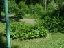 Такую красоту делают наши сотрудники садово-паркового отдела