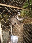 обезьянки в мини зоопарке