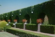 Фрагмент сада. Эеленый забор.