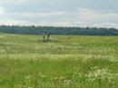 На пути обратно из Донца к Вырой удивились остановившейся прямо у поля машины и людей, гуляющих по этому полю. И вот что мы заметили, приглядевшись... ...