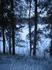 Январь 2009г. Фото с лесной стоянки.