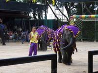 Парк Нонг Нуч. Шоу слонов.