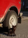 Пройдя немного дальше по улице Сторожевой башни мне встретилась ещё одна семейка кошачьих... Можно сказать,  Выборг - город кошек :) Этот малыш только ...