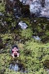 троллей в Норвегии можно встретить где угдно, будьте внимательны и вы обязательно их увидите