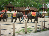Шоу слоников в зоопарке