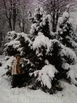 Вот столько снега!