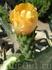 Ещё один цветок