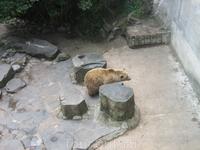 медведи во рву у замка