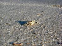 днём крабики прячутся, а вечером по пляжу носятся их тени всевозможных размеров