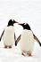 Два пингвина: найдите 10 отличий!