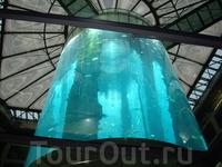 """супер-аквариум в лобби гостиницы """"Radisson SAS""""! внутри расположен лифт, который проходит в прозрачном внутреннем цилиндре"""