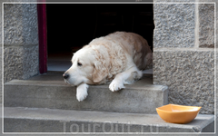 Сен Мало,грустная собака