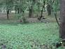 Ботанический сад. Павлины.