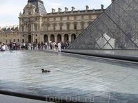 Утки, живущие в фонтанах Лувра )