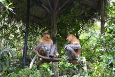 Сафари парк обезьяны рассказывают китайскую сказку