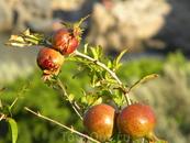 фрукты на Крите есть!