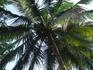 Пальма вроде самая обыкновенная, но чем-то же она привлекла :)