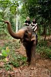 Умная слониха и мы
