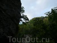Гуамское ущелье. Над головой стены природы, из которых по велению природы растут деревья.