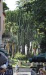 Сад перед Собором Святого Франческо