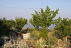 Персиковый сад на даче, которую мы снимали