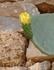 А среди разрушенных стен растет огромное количество кактусов.