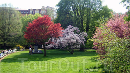 Сады Дворжака