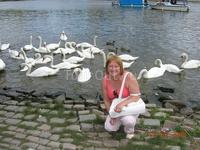 В Праге очень много лебедей