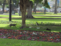 Парк Кеннеди - дом кошек