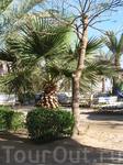 Красивые пейзажи в Египте можно сфоткать разве что у вашего отеля, особенно если он пятизвездночный