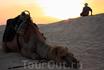 Традиции соблюдаем. В Сахару-на верблюдах. Жалко их очень только. Облезлые, все в шрамах. Напоминают наши разбитые маршрутки.