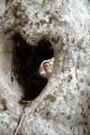 Сердце в стволе огромного платана - прекрасная замануха для туристов))