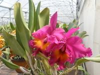 Музей орхидей.