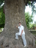 Размеры дерева лиран завораживают