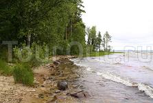 берег северной Онеги.