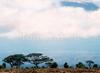 Фотография Национальный парк Килиманджаро