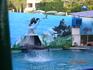Классный номер в дельфинарии