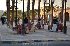 Египет без верблюдов - не Египет