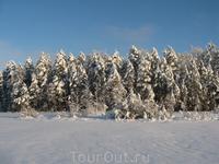 Вид на заснеженные берега. Снег - нетронутая целина. Слепит.
