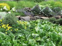 Алтайский ботанический сад