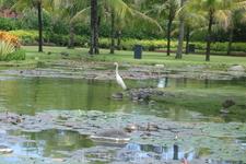 Бали/ территория отеля Хилтон.