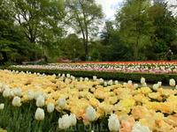 В 1774 году император Carlos III дает указание перенести Ботанический сад на новое место, где он и находится и поныне - El Paseo del Prado.