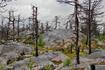 мистический лес Горы Смерти
