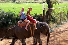 а на слоне не скучно...