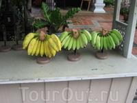 Вы какие бананы предпочитаете в это время суток, пожелтеет али позеленее.