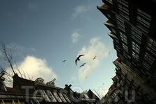 Птички Амстердама