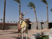 А верхом на верблюде здорово!!