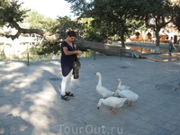 Бухара. Вот такие гуси живут на Лябихаус