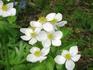 И опять цветочки